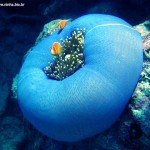 Corais - Apesar de parecerem com as plantas, os corais são animais pertencentes a mesma familia das anêmonas e das garrafas azuis.