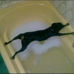 Cachorro com medo do banho. (Foto: divulgação)
