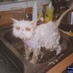 Que banho! (Foto: divulgação)