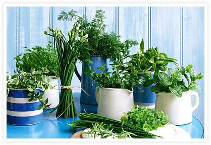 Horta de ervas aromáticas: como fazer