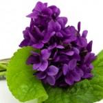 """Buquê de """"Violetas"""" significa lealdade. (Foto: divulgação)"""