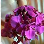 Quando você oferece flores esta oferecendo um pouco do seus sentimentos em relação a pessoa que as recebe. (Foto: divulgação)