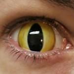 O olho de gato é uma lente que se caracteriza como um olho de gato real, e que contem diversas cores, brancas e pretas, laranjas e pretas, azuis, entre muitas outras. (Foto: divulgação)