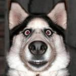 Cachorro assustado. (Foto: divulgação)