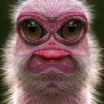 Animal muito estranho e engraçado. (Foto: divulgação)