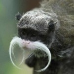 Macaco de bigode branco. (Foto: divulgação)