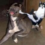 Gato dando um golpe no cachorro. (Foto: divulgação)