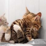 Gatinhos se abraçando. (Foto: divulgação)