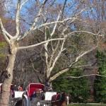 Passeio de charrete no Central Park. (Foto: divulgação)