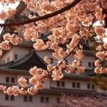 As cerejeiras em flor na primavera, o verde viçoso do início do verão, as folhagens escarlates no outono, e as paisagens de neve no inverno simbolizam as quatro estações. (Foto: divulgação)