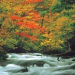 Seu clima é caracterizado por quatro estações bem definidas, que saúdam os turistas com as respectivas belezas cênicas em qualquer época que se visite o Japão. (Foto: divulgação)