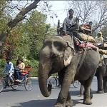 Os elefantes mas ruas mostram contrastes da Índia. (Foto: divulgação)