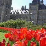 Na Holanda as tulipas aparecem com frequeência em todos os lugares (Foto: divulgação)