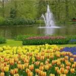 Jardins de tulipa na Holanda (Foto: divulgação)