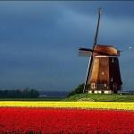 Os maiores campos de tulipas na Holanda podem ser encontrado nos jardins de tulipas Keukenhof. (Foto: divulgação)