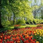 Dois terços das flores vibrantes são exportados, principalmente para os EUA e Alemanha.    (Foto: divulgação)