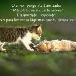Amor e amizade (Foto: divulgação)