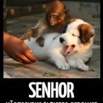 Cuidados com o cachorro (Foto: divulgação)