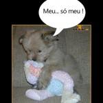 Cachorro possessivo (Foto: divulgação)