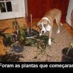 Foram as plantas...(Foto: divulgação)