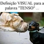 Definição visual (Foto: divulgação)