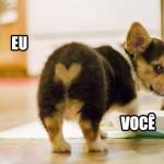 Cachorro apaixonado (Foto: divulgação)