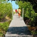Acesso para a Praia dos Nativos (Foto: divulgação)