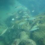 Mergulho em Porto de Galinhas (Foto: divulgação)