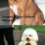 Cachorro baitola (Foto: divulgação)