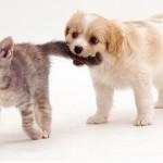 Filhote de cachorro brincando com gatinho (Foto: divulgação)