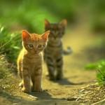 Simplesmente lindos e fofos esses gatinhos na natureza (Foto: divulgação)