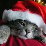 Gatinho com touca de Papai Noel (Foto: divulgação)
