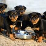 Por isso, desde pequenos eles devem ter uma alimentação adequada. (Foto: Divulgação)