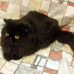 O gato persa é um pouco mais quieto (Foto: Divulgação)
