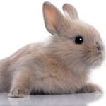 Filhote de coelho (Foto: Divulgação)