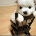 Filhote de cachorro tentando subir na cadeira (Foto: Divulgação)