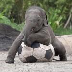 Filhote de elefante (Foto: Divulgação)