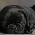 Não me acorde, por favor! (Foto: Divulgação)