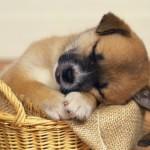 Dormindo na cesta (Foto: Divulgação)