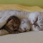 Protegendo os filhotes (Foto: Divulgação)