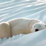 Nem os animais mais ferozes escapam daquela soneca (Foto: Divulgação)