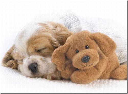 Assim como o homem, os animais também adoram tirar uma soneca (Foto: Divulgação)