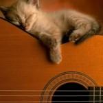 Sonhando com as notas musicais (Foto: Divulgação)