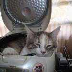 Na panela elétrica (Foto: Divulgação)