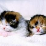 Os filhotes de gato passam boa parte do tempo dormindo (Foto: Divulgação)
