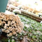 Decoração de casamento com margaridas. (Foto:Divulgação)