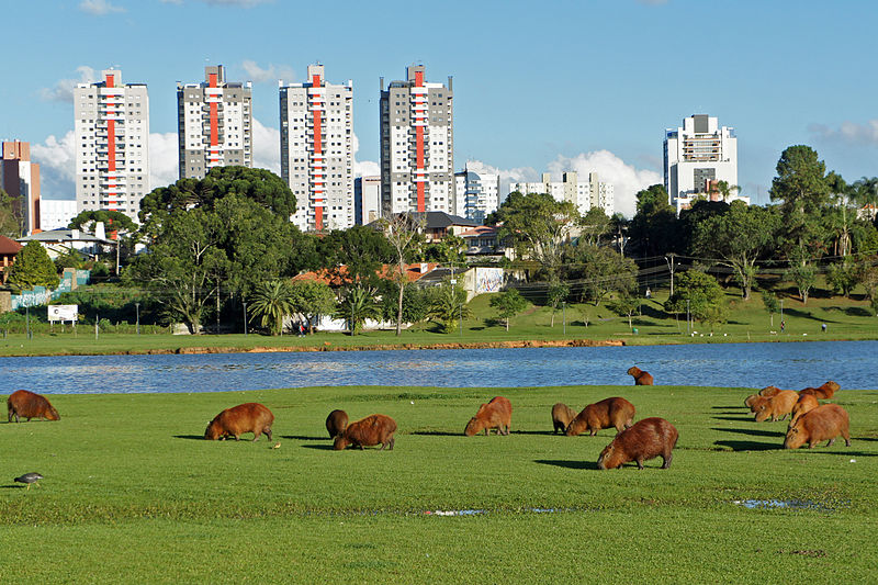 Jardim em Curitiba (Foto: Divulgação)