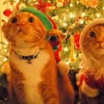 Gatos comemorando o Natal (Foto: Divulgação)