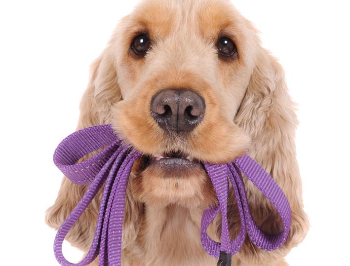 Cão estressado: sintomas, como tratar