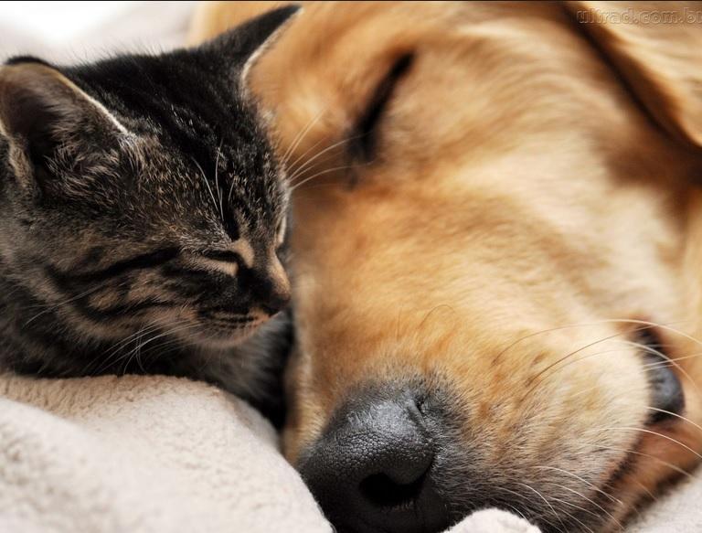 Como melhorar a convivência de cães e gatos